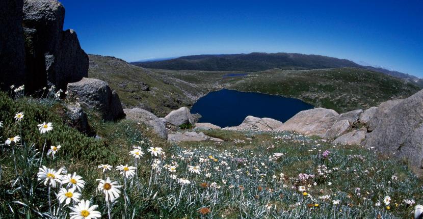 Guía para explorar los Alpes Australianos